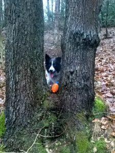 ... den Ball zu. Aber bitte zurück werfen!