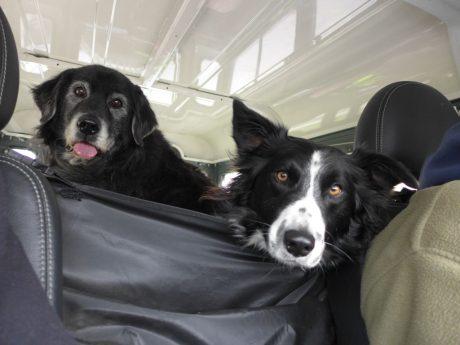 Endlich mal wieder mit allen Hundejungs auf der Hundwiese Hattingen