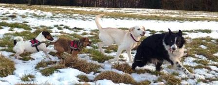 Schnee-Toberunde mit Olga, Herb und Spike (ohne Rupi)